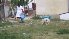Câinii sunt toleraţi şi chiar îngrijiţi de angajaţii centrului