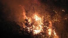 Zeci de hectare de pădure au fost mistuite de flăcări