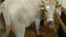 Animalele vor fi vaccinate preventiv