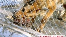"""Hrana animalelor, adusă de """"băieţii deştepţi"""" pentru Zoo"""