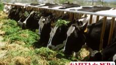 Subvenţia pentru zootehnie poate fi solicitată până pe 15 iunie