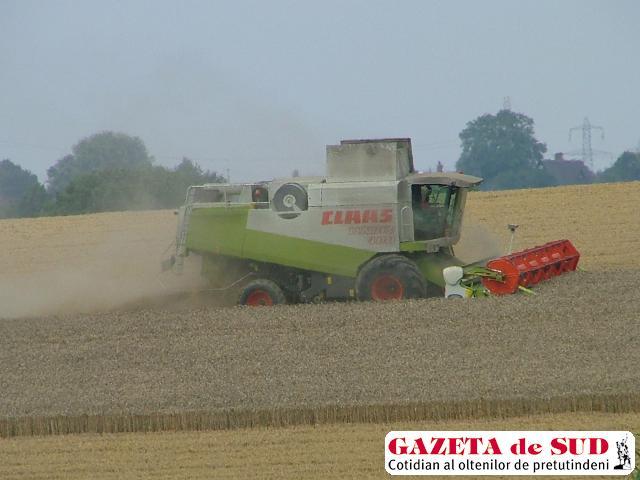Anul acesta s-a obţinut o producţie de 4.000 kg de grâu la hectar
