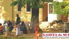 Maidanezii dau o tură prin bucătăria spitalului