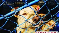 În lipsa unui adăpost care să le ofere cazare pe termen nelimitat, zeci de câini comunitari aşteaptă la Făcăi să fie adoptaţi
