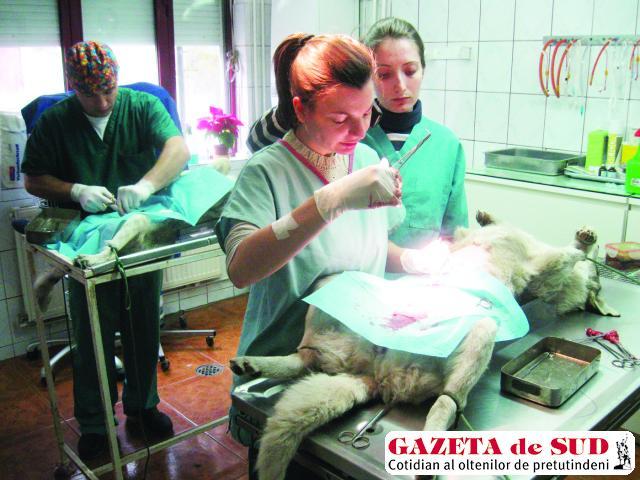 În cabinetul Family Vet, în timpul activităţii de sterilizare
