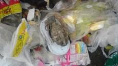 La groapa de gunoi a fost găsită o grenadă defensivă