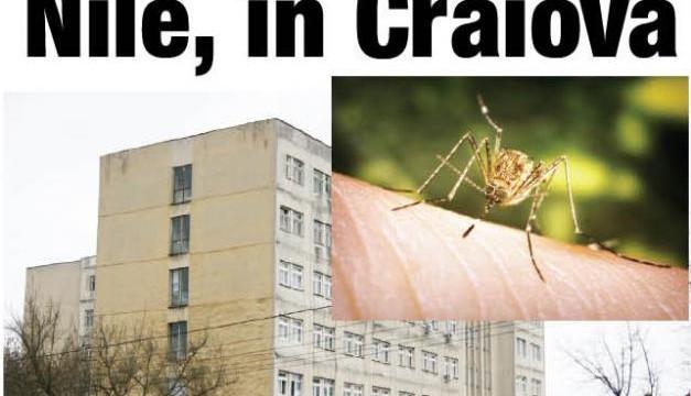 La Spitalul de Boli Infecţioase din Craiova a ajuns o femeie infectată prin înţepătura ţânţarului