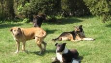 Câinii din Târgu Jiu vor ajunge pe mâna veterinarilor