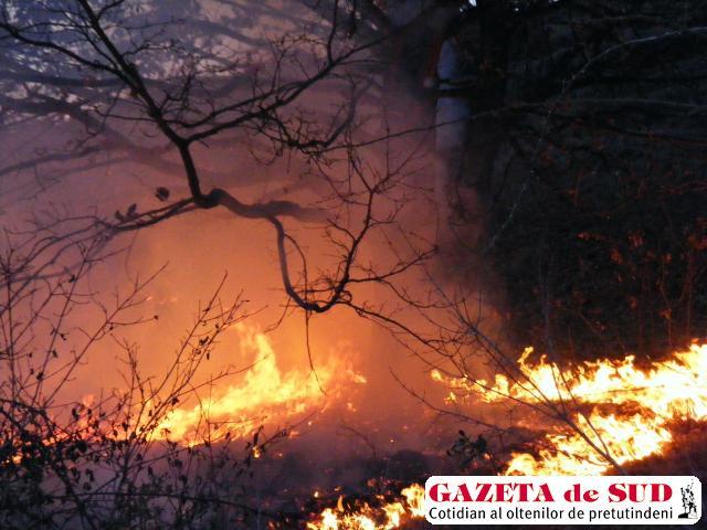Sute de hectare de vegetaţie uscată au ars în ultimele 48 de ore