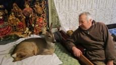 Dumitru Merosu, bătrânul care îngrijeşte acum puiul de căprioară