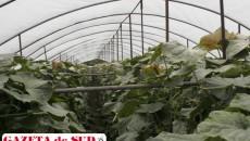 Agricultorii care au cultivat legume în solarii au cele mai mari sume de plată către stat, dar se presupune că ei au încasat şi cei mai mulţi bani din vânzarea acelor legume