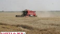 În 2013, culturile de grâu au fost mai puțin calamitate, dar anul acesta sunt multe suprafețe și chiar solarii distruse fie  de inundații, fie de grindină