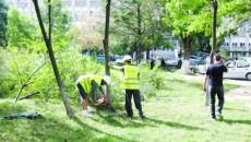 Muncitorii au început să defrişeze parcul din faţa spitalului