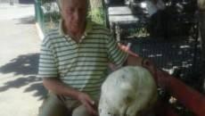 Dacă este comestibilă ciuperca va fi făcută zacuscă (Foto: adevarul.ro)