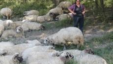 """Daniela Popa: """"Mi-au murit deja patru oi, iar alte nouă le am sub tratament"""""""