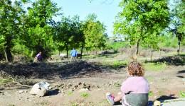 """Câțiva arbori din parcul """"Domeniile Coroanei"""" au fost doborâți. Nevoiașii au și intrat la cules de crengi."""