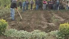 Aproximativ 100 de butaşi de trandafir au fost sădiţi astăzi în Grădina Botanică din Craiova