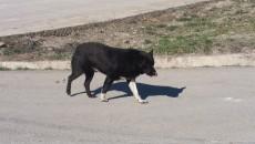 Răfuiala a pornit de la un câine