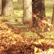 autumn-leaves-nature-wind-1024x768
