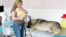 Până la 31 decembrie, toţ proprietarii de câini trebuie să îşi microcipeze animalele