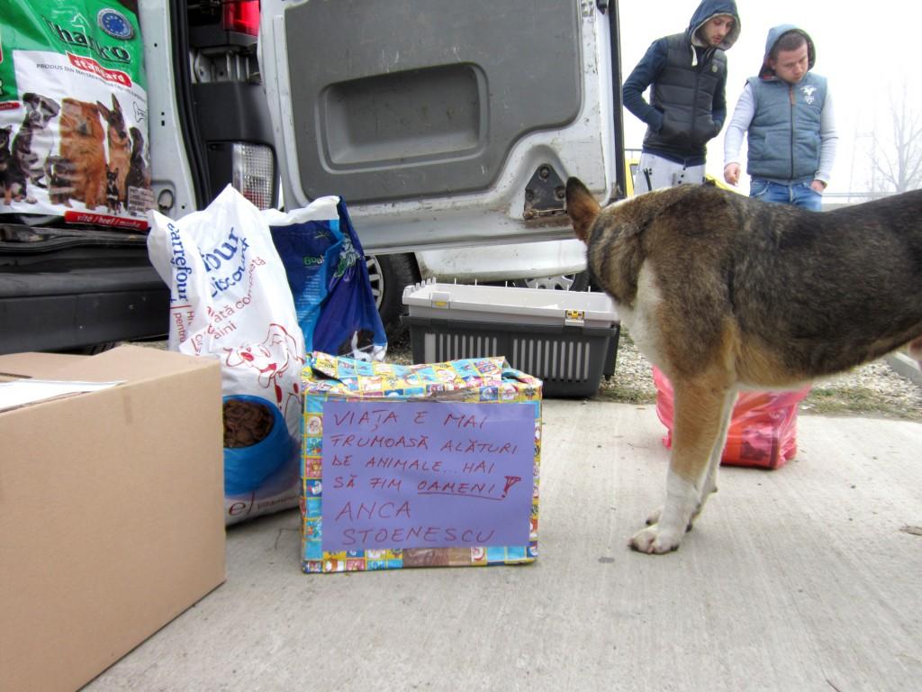 Anul trecut, Moș Crăciun a trimis la Breasta o dubiță plină cu hrană pentru sutele de câini din adăpost - FOTO: Arhiva GdS