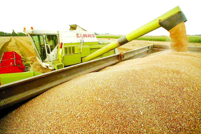 Inculpații au fost acuzați că, în baza unor tranzacții fictive cu cereale, au prejudiciat bugetul statului cu suma totală de peste 2,5 milioane de lei