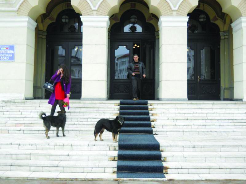 În primăvară va fi demarată o campanie de sterilizare a câinilor comunitari (Foto: Eugen Măruţă)