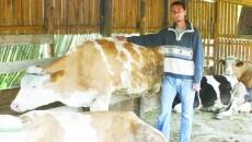 Laptele de vacă din producție locală este din ce în ce mai puțin, în timp ce piața este invadată de lapte din alte zone și chiar din alte țări (FOTO: arhiva GdS)