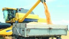 Craioveanul a fost acuzat că a trecut în actele firmei operațiuni comerciale fictive cu cereale (Foto: Arhiva GdS)