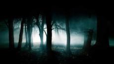 a_forest_darkly3_86868400