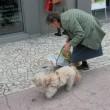 Târgujienii îşi pot castra gratuit câinii sau pisicile (Foto: Eugen Măruţă)