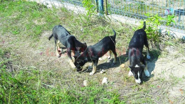 Câinii comunitari vor beneficia de un padoc mai mare (Foto: Eugen Măruţă)