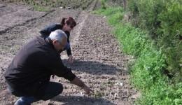 Mai multe soiuri de plante vor fi scoase în curând din pepinieră și plantate prin Craiova (Foto: Traian Mitrache)