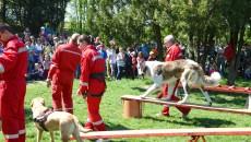 Craiovenii prezenți pe hipodrom au putut admira, ieri, unii membri ai Centrului Național de Educare Canină (Foto: Anca Ungurenuș)