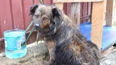 Cățelușa a fost adoptată din adăpostul de la Breasta, iar adoptatorii se plâng de starea în care animalul le-a fost dat, fiind deparazitat necorespunzător ()