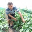 Aristel Nunescu ne arată o parte din producția de ardei de anul acesta