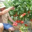 Tiberiu Dragu promovează legumele oltenești (Foto: Claudiu Tudor)