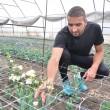 Mihai Claudiu Lăcraru își îngrijește cu pasiune florile din solar (Foto: Claudiu Tudor)