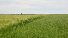 Terenurile productive din Dolj atrag și impozite pe măsură, ce trebuie achitate anual de agricultori. Totuși, în Dolj, impozitul  pe venitul din agricultură, plătit la norme de venit, este mai mic în 2015 față de anii trecuți. (FOTO: arhiva GdS)