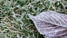 frozen-leaf-on-grass