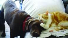 o-CAT-LICKS-DOG-PHOTO-facebook
