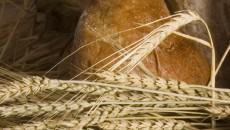 comertul-cu-cereale-a-adus-prejudicii-de-75-mil-lei-in-iunie
