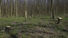 Pădurea din Daneți a fost lăsată pradă hoților (Foto: Lucian Anghel)