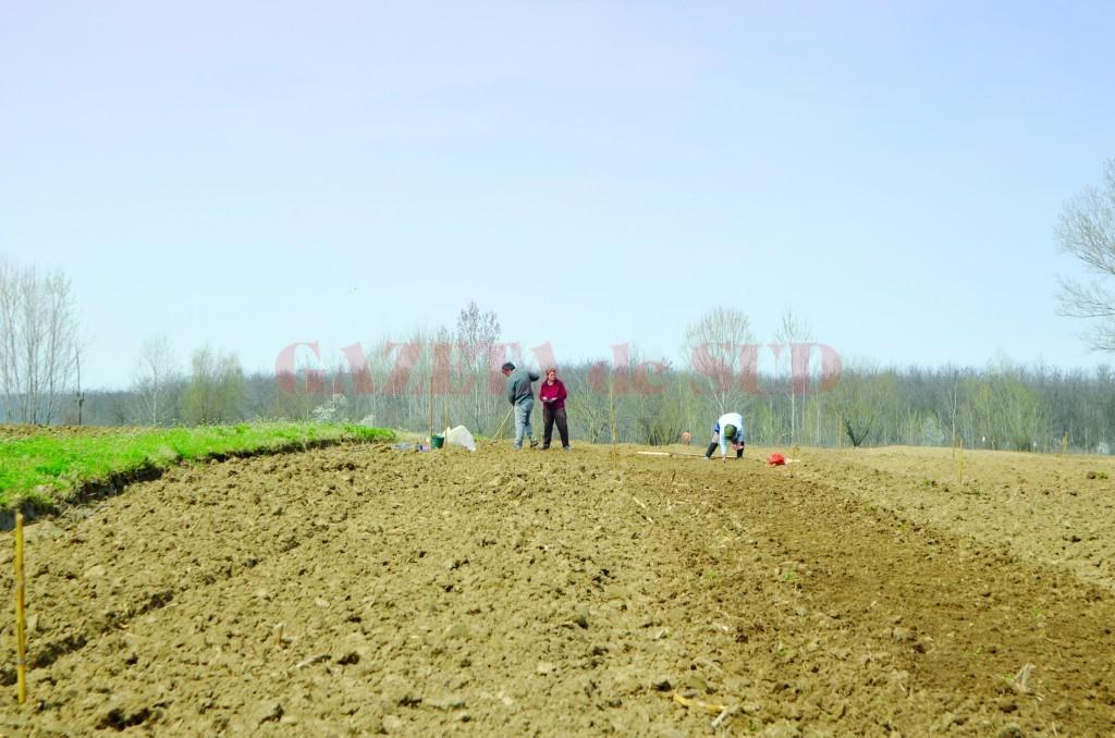 Fermierii trebuie să fie foarte atenți ce suprafețe declară la APIA (Foto: Arhiva GdS)