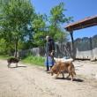 În Rocșoreni sunt mai mulți câini decât localnici (Foto: Traian Mitrache)