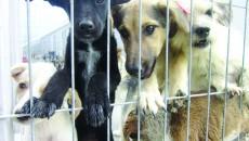 Într-o scrisoare deschisă, reprezentanta unei organizații nonguvernamentale pentru protecția animalelor vorbește despre situația maidanezilor din Craiova și din țară (FOTO: GdS)