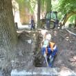 Rădăcinile copacilor din zona castelului, unde se fac săpături pentru introducerea cablurilor, sub asediul sapei și al toporului (Foto: Traian Mitrache)