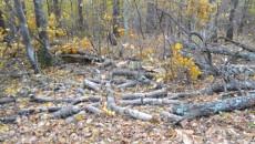 Pădurile, rase de pe suprafaţa pământului (Foto: Eugen Măruţă)
