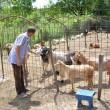 Ion Popescu și caprele sale (Foto: Claudiu Tudor)