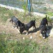 Câinii comunitari vor fi microcipaţi (Foto: Eugen Măruţă)